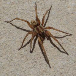 Уничтожение пауков в Железнодорожном